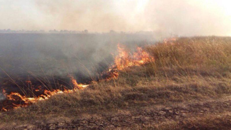 Сгорело поле с зерном