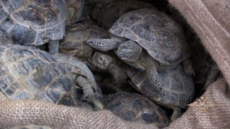Дело о черепахах