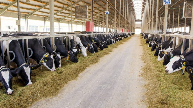 В Оренбургской области подвели итоги за первое полугодие 2020 года среди хозяйств по производству молока