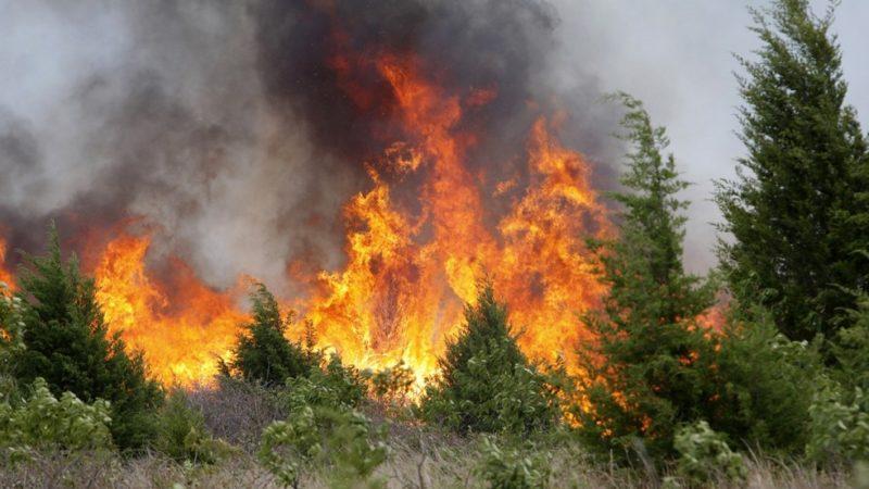 Степные и лесные пожары