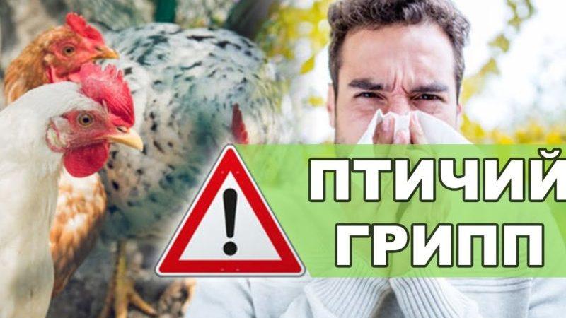 По соседству с Оренбургской областью выявили вспышку птичьего гриппа
