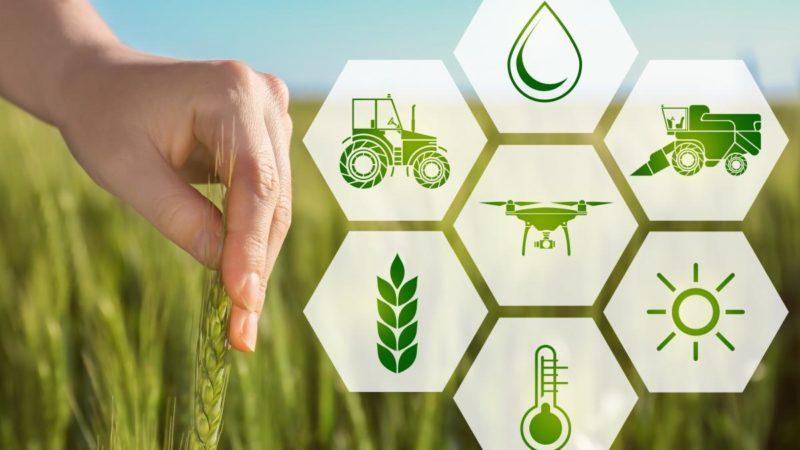 Аграриям Оренбуржья одобрены субсидии на случай гибели урожая