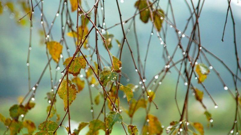 В свои права вступает осень
