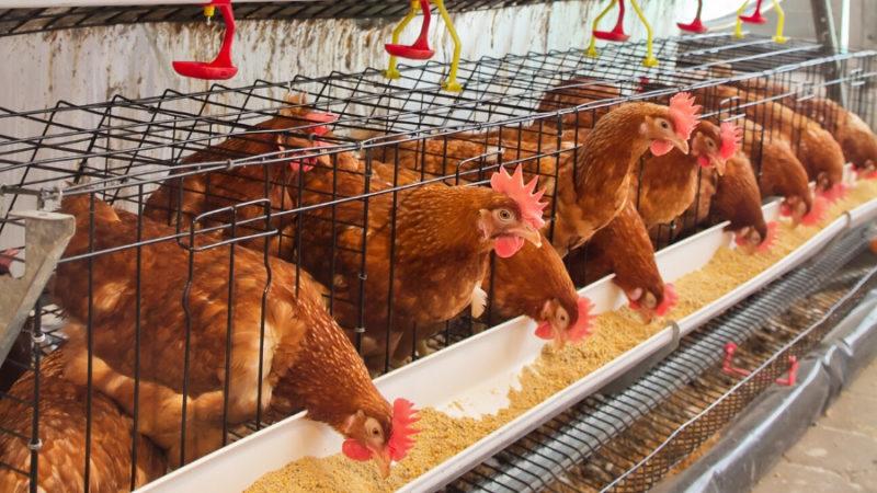 В Оренбургской области  увеличен экспорт готовой пищевой продукции