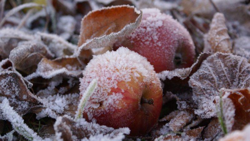 Заморозки и сухая погода