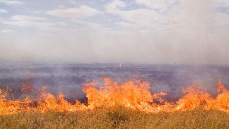 За день в Оренбуржье выгорело почти 20 га степи