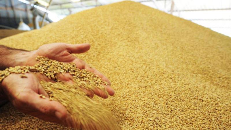 Аграрии собрали 3,7 миллионов тонн зерна