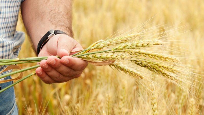Агрострахование для фермеров