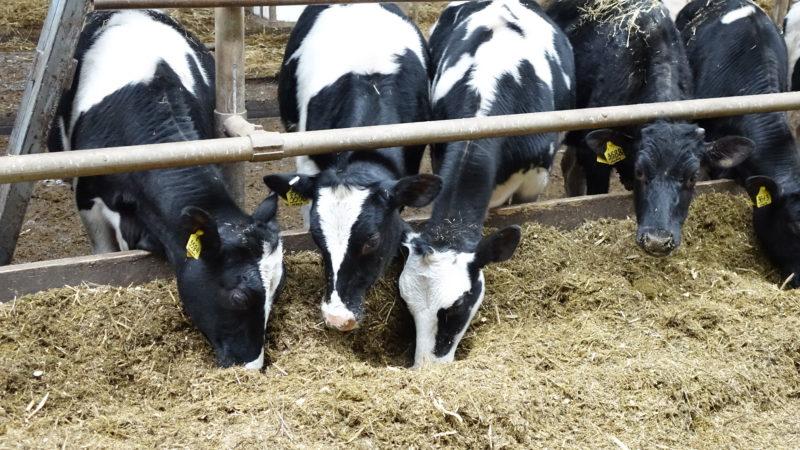 Новости с полей и ферм округа