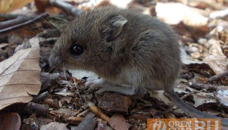 И снова — о мышиной лихорадке