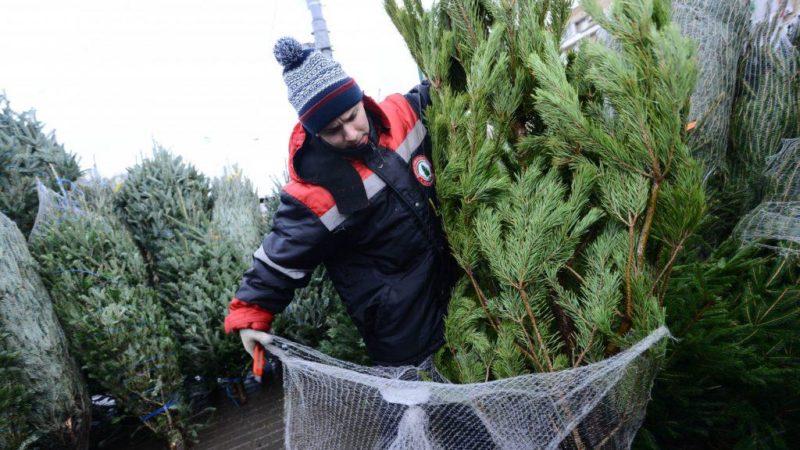 Россельхознадзор проверит новогодние ели