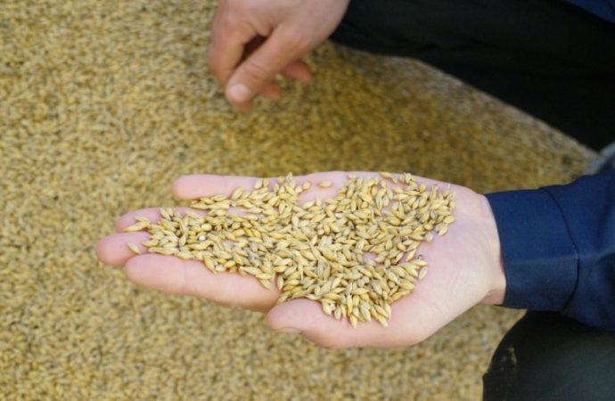 Семена – залог хорошего урожая
