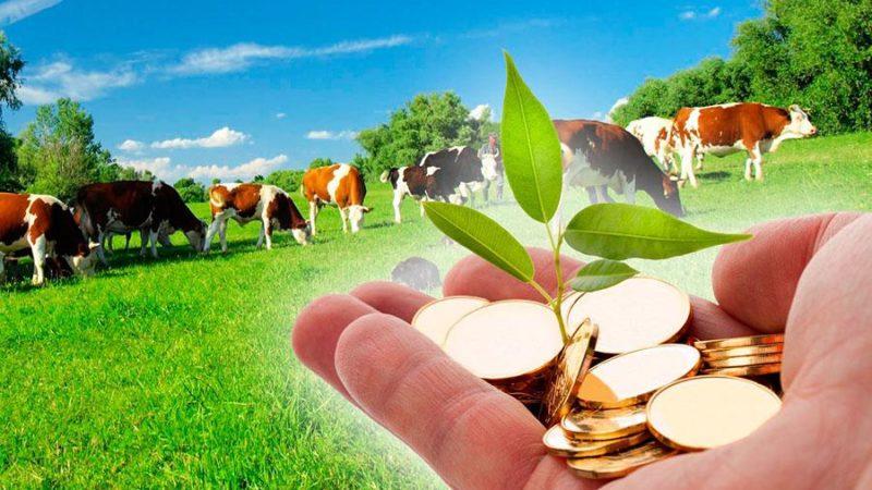Конкурс на сельскохозяйственные гранты стартовал