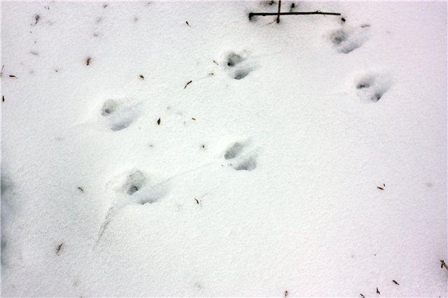 В Оренбургской области ведется подсчет диких животных по их следам