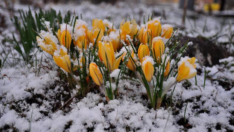Весна придет в апреле