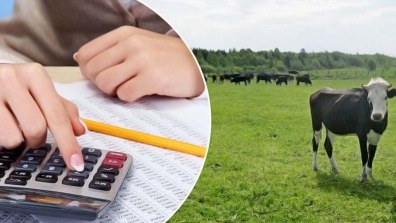 Сорочинские сельхозпроизводители получат гранты
