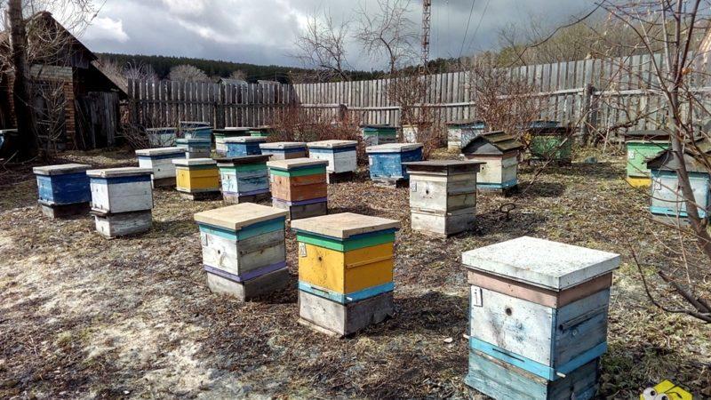 У хорошего пчеловода — нет плохих сезонов
