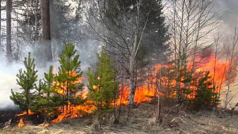 Бросать горящие спички и окурки запрещено Пожарнадзором