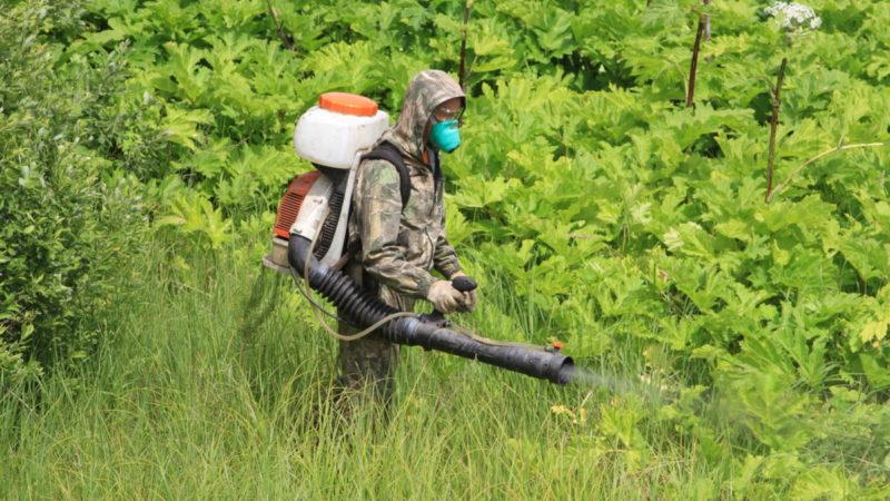 Запрещено пребывание людей в лесных массивах