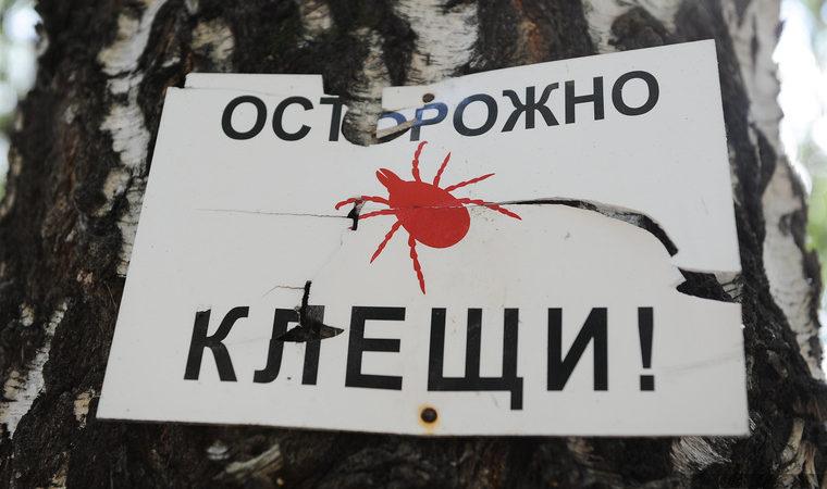 Семь территорий в Оренбуржье названы эндемичными по опасным клещам