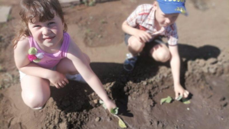 Посадили огород, посмотрите – что растёт!