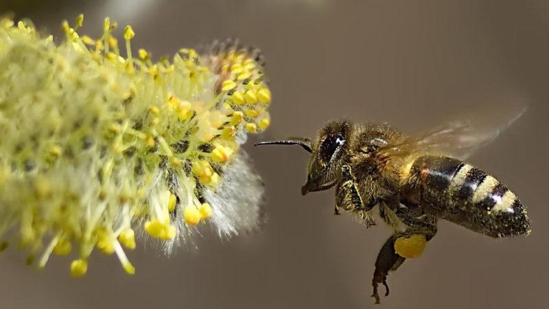 Пчеле жара не подмога