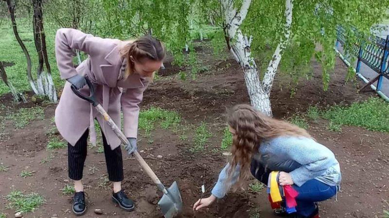 Оставь о себе добрую память – посади яблоню