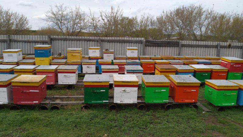 Время собирать мёд