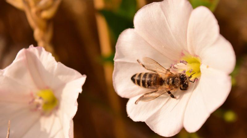 Жара пчеле «не товарищ»