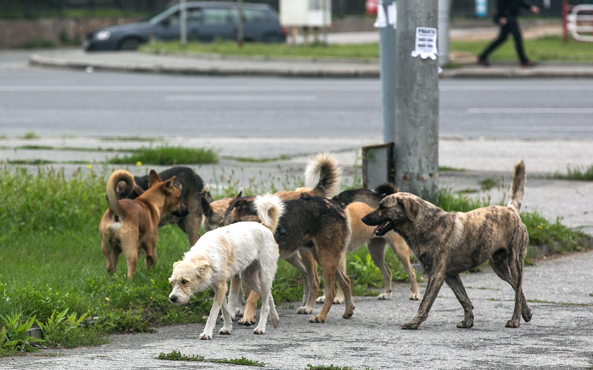 Время бродячих собак